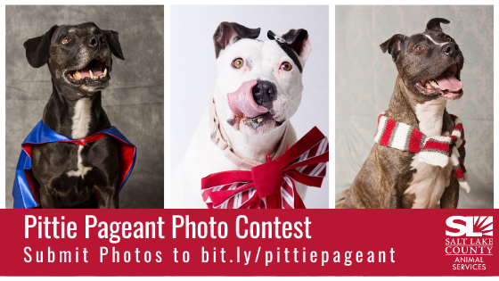 Pittie Pageant