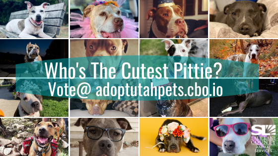 pittie pageant began
