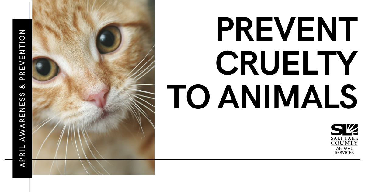 Prevent Cruelty to Animals