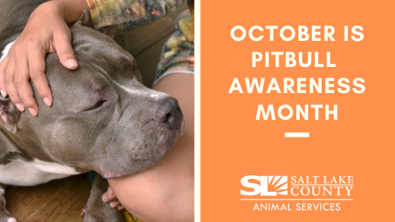 Pitbull Awarness Month