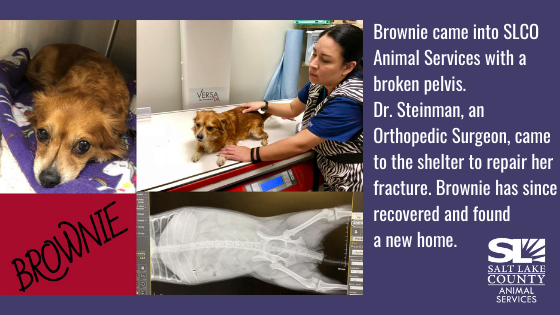 brownie injured animal
