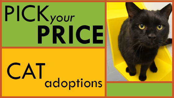 pick your price cat adoptions blog